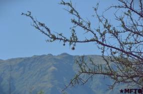 2014_05_30_DE TELARES ANCESTRALES EN LAS SIERRAS DE CÓRDOBA_EL_07